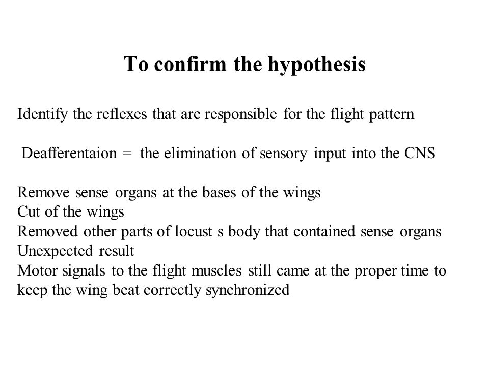 Extreme experiment Reduced the animal to a head and the floor of the thorax and the thoracic nerve cord Elecrodes on the stumps of the nerves that had innervated the removed flight muscles Motor pattern recorded in the absence of any movement of part of animal – fictive pattern Locust flight systém did not require sensory feedback to provide timing cues for rhythm generation Network of neurons Oscillator, pacemaker, central pattern generator