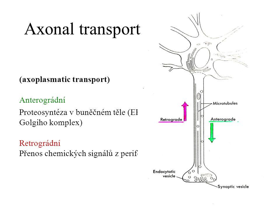 Degenerace a regenerace nervové tkáně Zničené (diferencované) neurony nemohou být nahrazeny Trauma CNS – gliální jizva Axony v CNS Axony v PNS