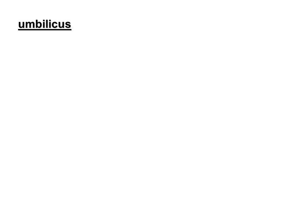 umbilicus
