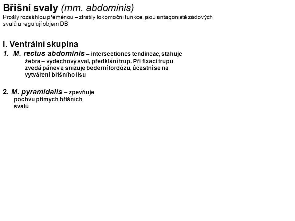 Diaphragma pelvis m.levator ani (m. pubococcygeus, m.