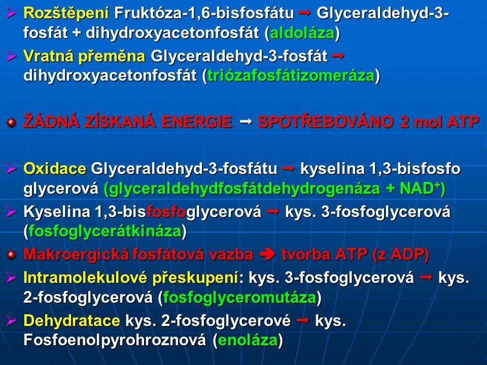  Rozštěpení Fruktóza-1,6-bisfosfátu  Glyceraldehyd-3- fosfát + dihydroxyacetonfosfát (aldoláza)  Vratná přeměna Glyceraldehyd-3-fosfát  dihydroxyacetonfosfát (triózafosfátizomeráza) ŽÁDNÁ ZÍSKANÁ ENERGIE  SPOTŘEBOVÁNO 2 mol ATP  Oxidace Glyceraldehyd-3-fosfátu  kyselina 1,3-bisfosfo glycerová (glyceraldehydfosfátdehydrogenáza + NAD + )  Kyselina 1,3-bisfosfoglycerová  kys.
