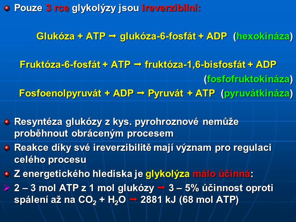 Pouze 3 rce glykolýzy jsou ireverzibilní: Glukóza + ATP  glukóza-6-fosfát + ADP (hexokináza) Fruktóza-6-fosfát + ATP  fruktóza-1,6-bisfosfát + ADP (fosfofruktokináza) Fosfoenolpyruvát + ADP  Pyruvát + ATP (pyruvátkináza) Resyntéza glukózy z kys.
