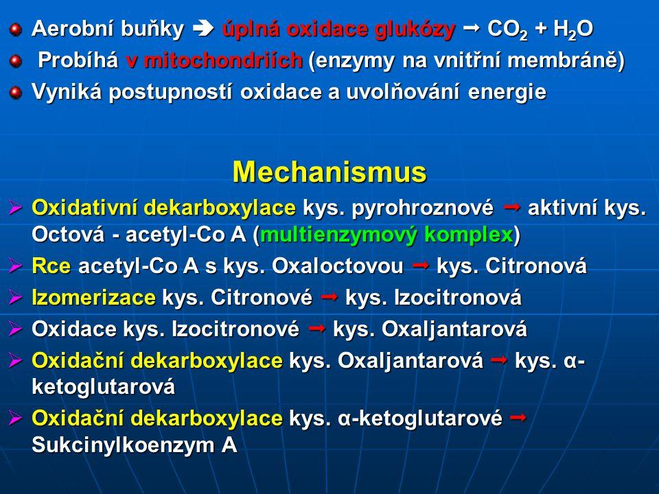Aerobní buňky  úplná oxidace glukózy  CO 2 + H 2 O Probíhá v mitochondriích (enzymy na vnitřní membráně) Probíhá v mitochondriích (enzymy na vnitřní membráně) Vyniká postupností oxidace a uvolňování energie Mechanismus  Oxidativní dekarboxylace kys.