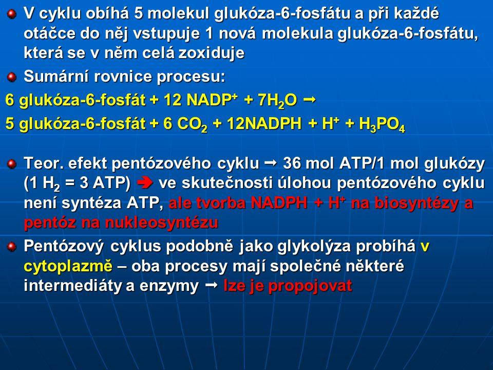 V cyklu obíhá 5 molekul glukóza-6-fosfátu a při každé otáčce do něj vstupuje 1 nová molekula glukóza-6-fosfátu, která se v něm celá zoxiduje Sumární rovnice procesu: 6 glukóza-6-fosfát + 12 NADP + + 7H 2 O  5 glukóza-6-fosfát + 6 CO 2 + 12NADPH + H + + H 3 PO 4 Teor.