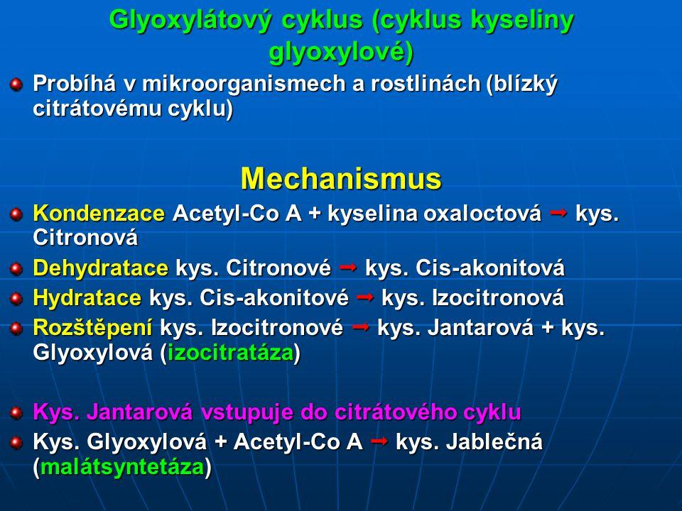Glyoxylátový cyklus (cyklus kyseliny glyoxylové) Probíhá v mikroorganismech a rostlinách (blízký citrátovému cyklu) Mechanismus Kondenzace Acetyl-Co A + kyselina oxaloctová  kys.