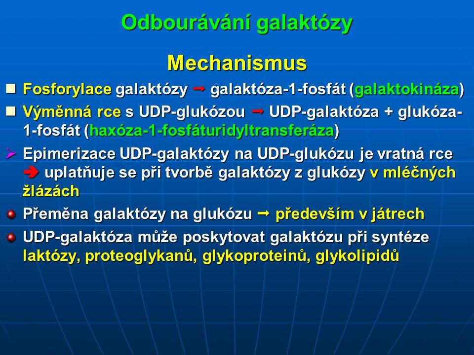 Odbourávání galaktózy Mechanismus Fosforylace galaktózy  galaktóza-1-fosfát (galaktokináza) Fosforylace galaktózy  galaktóza-1-fosfát (galaktokináza) Výměnná rce s UDP-glukózou  UDP-galaktóza + glukóza- 1-fosfát (haxóza-1-fosfáturidyltransferáza) Výměnná rce s UDP-glukózou  UDP-galaktóza + glukóza- 1-fosfát (haxóza-1-fosfáturidyltransferáza)  Epimerizace UDP-galaktózy na UDP-glukózu je vratná rce  uplatňuje se při tvorbě galaktózy z glukózy v mléčných žlázách Přeměna galaktózy na glukózu  především v játrech UDP-galaktóza může poskytovat galaktózu při syntéze laktózy, proteoglykanů, glykoproteinů, glykolipidů