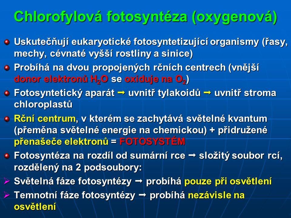 Chlorofylová fotosyntéza (oxygenová) Uskutečňují eukaryotické fotosyntetizující organismy (řasy, mechy, cévnaté vyšší rostliny a sinice) Probíhá na dvou propojených rčních centrech (vnější donor elektronů H 2 O se oxiduje na O 2 ) Fotosyntetický aparát  uvnitř tylakoidů  uvnitř stroma chloroplastů Rční centrum, v kterém se zachytává světelné kvantum (přeměna světelné energie na chemickou) + přidružené přenašeče elektronů = FOTOSYSTÉM Fotosyntéza na rozdíl od sumární rce  složitý soubor rcí, rozdělený na 2 podsoubory:  Světelná fáze fotosyntézy  probíhá pouze při osvětlení  Temnotní fáze fotosyntézy  probíhá nezávisle na osvětlení