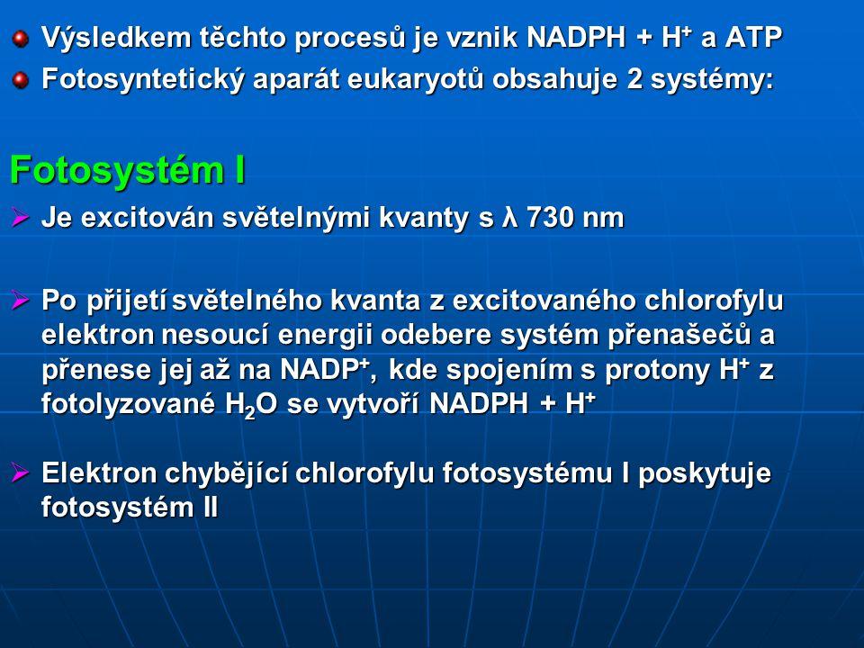 Výsledkem těchto procesů je vznik NADPH + H + a ATP Fotosyntetický aparát eukaryotů obsahuje 2 systémy: Fotosystém I  Je excitován světelnými kvanty s λ 730 nm  Po přijetí světelného kvanta z excitovaného chlorofylu elektron nesoucí energii odebere systém přenašečů a přenese jej až na NADP +, kde spojením s protony H + z fotolyzované H 2 O se vytvoří NADPH + H +  Elektron chybějící chlorofylu fotosystému I poskytuje fotosystém II