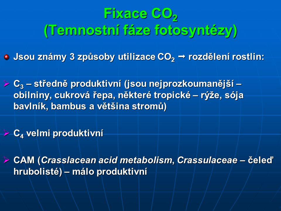 Fixace CO 2 (Temnostní fáze fotosyntézy) Jsou známy 3 způsoby utilizace CO 2  rozdělení rostlin:  C 3 – středně produktivní (jsou nejprozkoumanější – obilniny, cukrová řepa, některé tropické – rýže, sója bavlník, bambus a většina stromů)  C 4 velmi produktivní  CAM (Crasslacean acid metabolism, Crassulaceae – čeleď hrubolisté) – málo produktivní