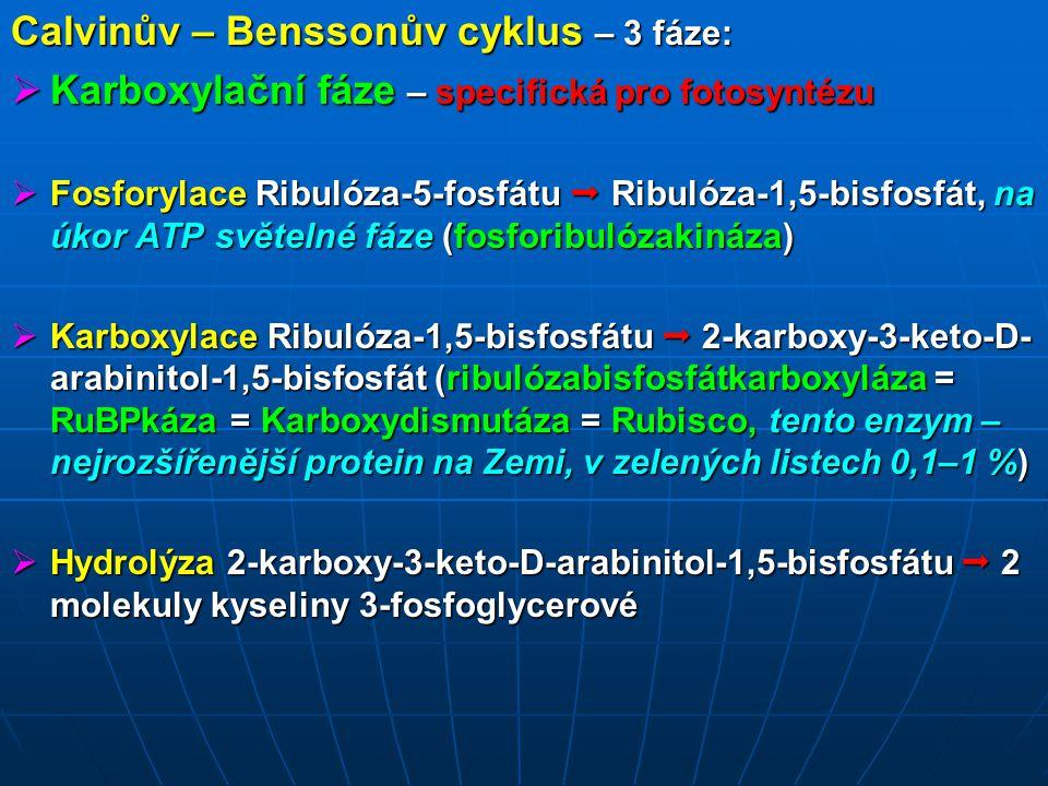 Redukční fáze – reakce glykolýzy  Fosforylace kyseliny 3-fosfoglycerové  Kys.-1,3- bisfosfoglycerová (fosfoglycerátkináza)  Redukce Kys.-1,3-bisfosfoglycerové  Glyceraldehyd-3- fosfát (NADH + H +, je produktem světelné fáze fotosyntézy)  Izomerizace části glyceraldehyd-3-fosfátu  Fosfodioxyaceton  Kondenzace Glyceraldehyd-3-fosfátu + Fosfodioxyacetonu  Fruktóza-1,6-bisfosfát  Defosfatace Fruktóza-1,6-bisfosfát  Fruktóza-6-fosfát  Izomerizace Fruktóza-6-fosfát  Glukóza-6-fosfát