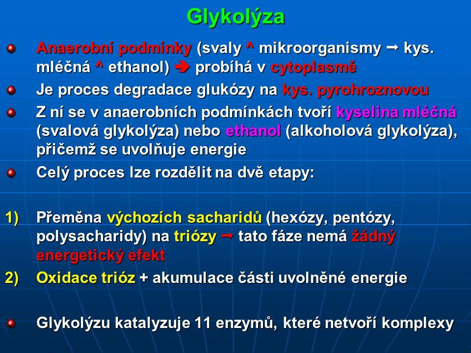 Glykolýza Anaerobní podmínky (svaly ^ mikroorganismy  kys.