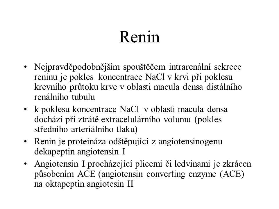 Renin Nejpravděpodobnějším spouštěčem intrarenální sekrece reninu je pokles koncentrace NaCl v krvi při poklesu krevního průtoku krve v oblasti macula