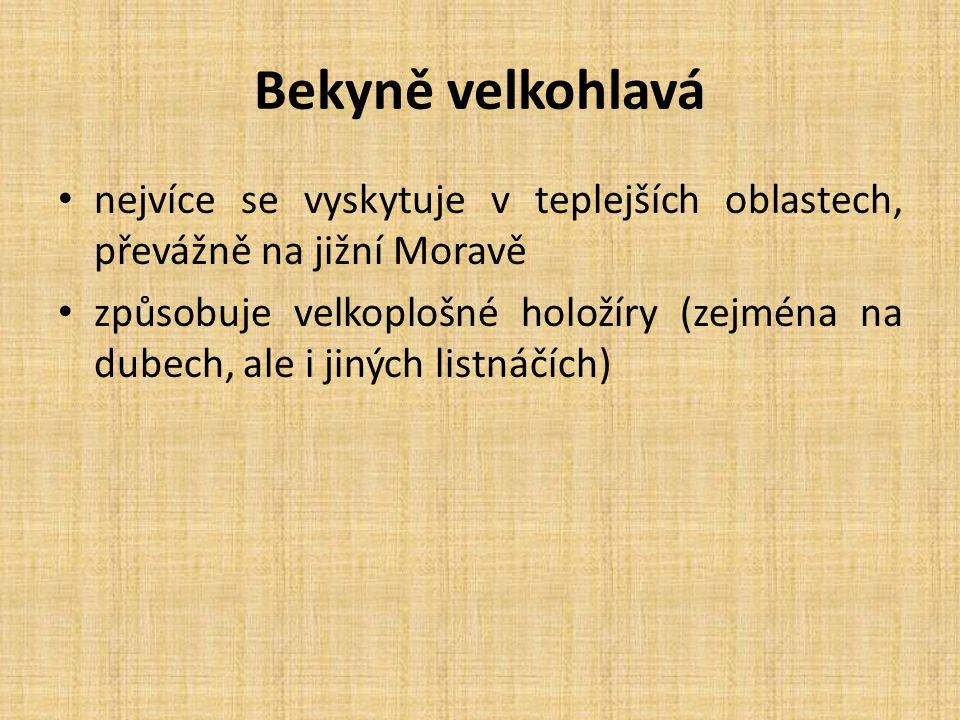 Bekyně velkohlavá nejvíce se vyskytuje v teplejších oblastech, převážně na jižní Moravě způsobuje velkoplošné holožíry (zejména na dubech, ale i jiných listnáčích)