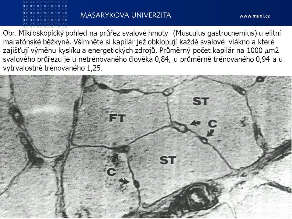 7. Pohybové schopnosti - vytrvalostní a obratnostní CZ.1.07/2.2.00/15.0199 Cizí jazyky v kinantropologii13 Obr. Mikroskopický pohled na průřez svalové