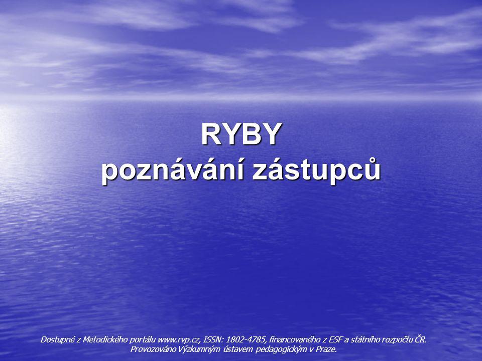 RYBY poznávání zástupců Dostupné z Metodického portálu www.rvp.cz, ISSN: 1802-4785, financovaného z ESF a státního rozpočtu ČR.