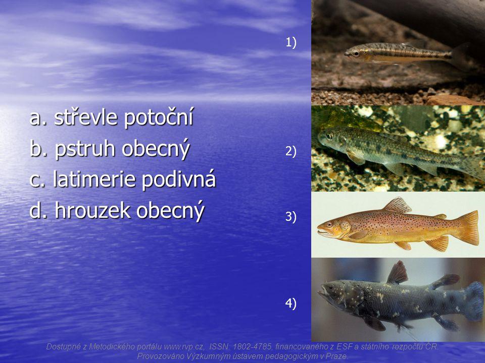 a.střevle potoční b. pstruh obecný c. latimerie podivná d.