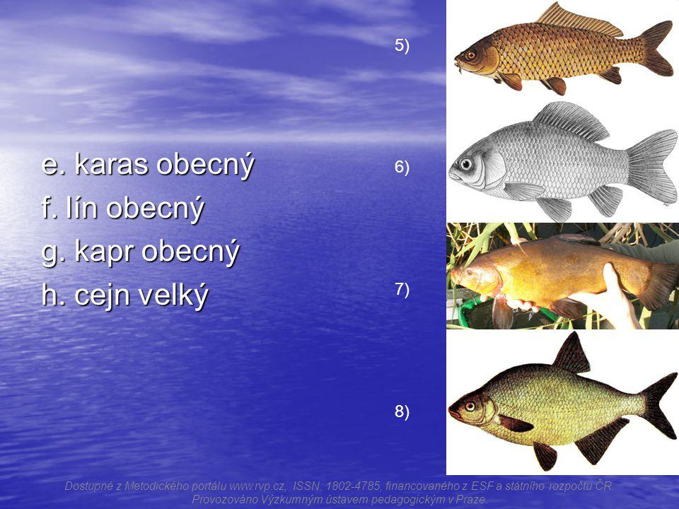 e.karas obecný f. lín obecný g. kapr obecný h.