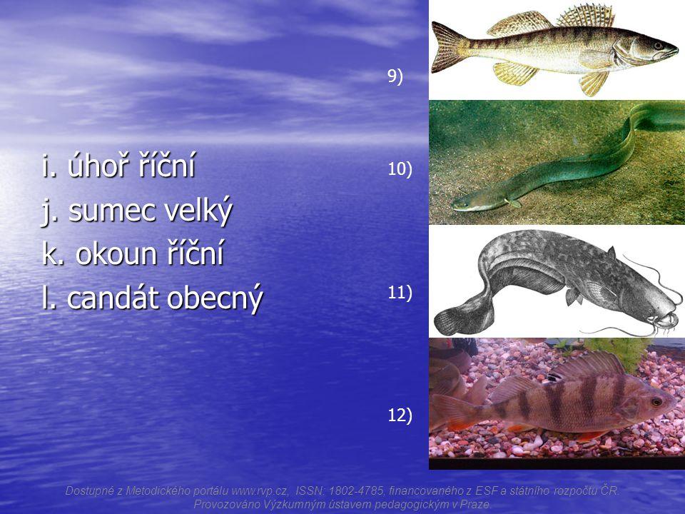 m.treska obecná n. tuňák atlantský o. sardinka kalifornská p.