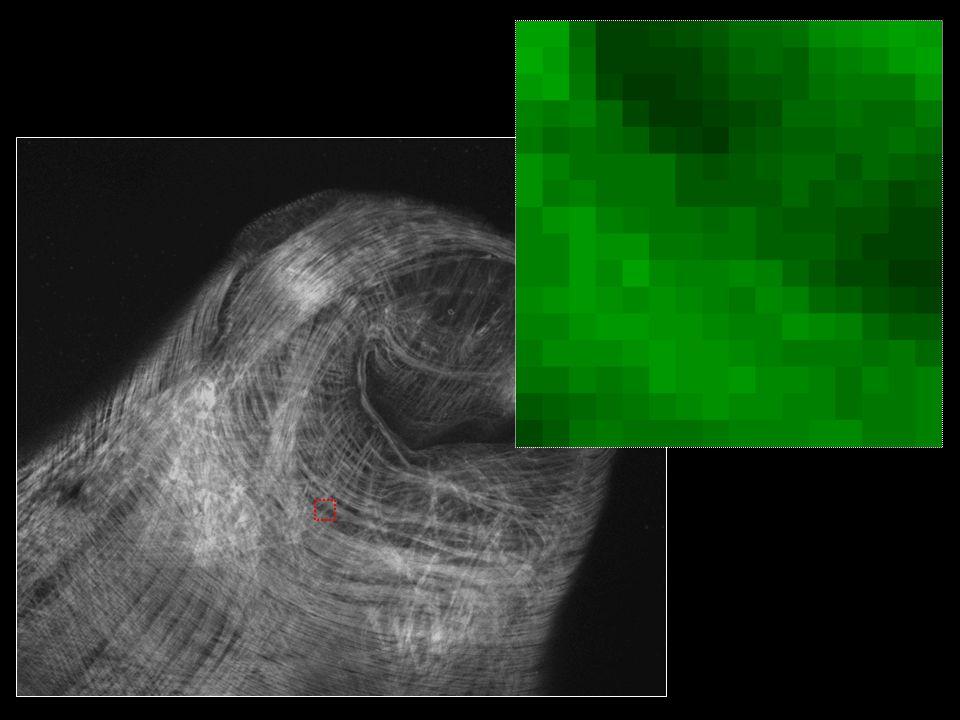 Schéma současného konfokálního mikroskopu (s rozmítaným laserovým paprskem) (Vesmír, 1995) zaostřená rovina zrcadlová bodová clonka laser dělič paprsků a rastrovací zařízení informace o souřadnicích bodů (X - Y) konfokální bodová clonka detektor světla informace o intenzitě světla objektiv objekt