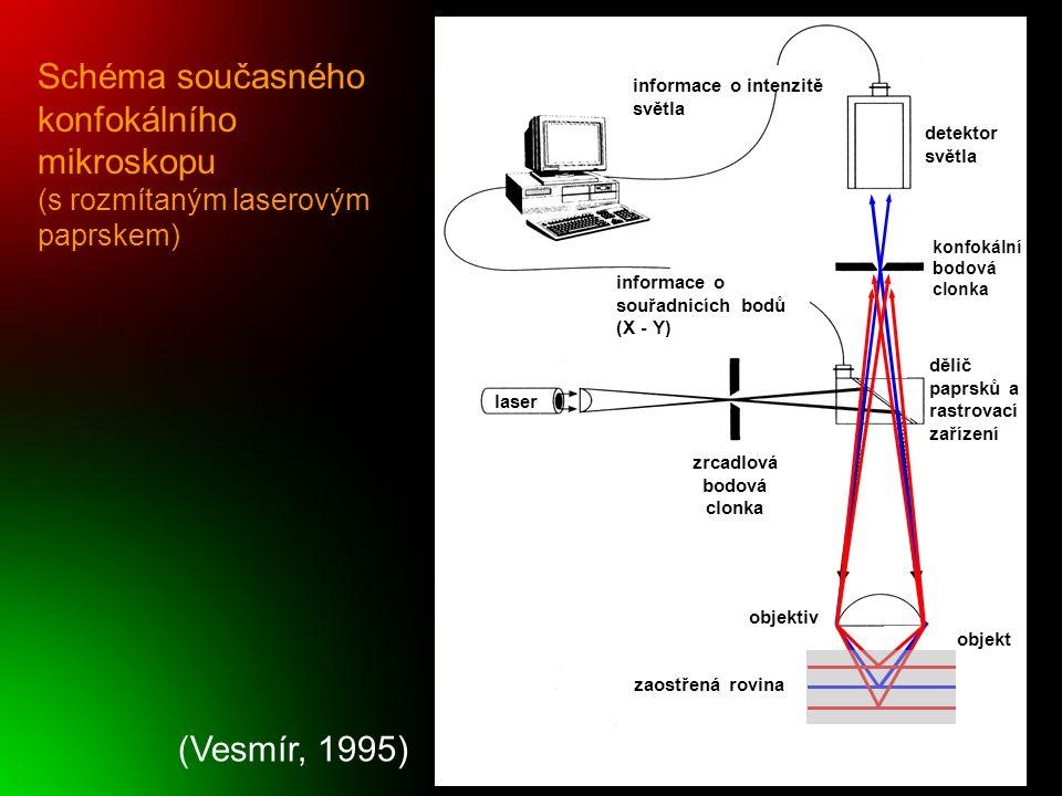 Dvoufotonová mikroskopie absorbce 2 fotonů fluorochromem ve stejném okamžiku => záření s dvojnásobnou vlnovou délkou (poloviční energie) => excitační záření 700 nm (červená) => emitované záření 900 nm