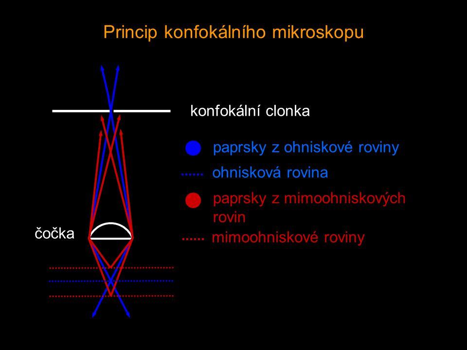 konfokální clonka paprsky z ohniskové roviny paprsky z mimoohniskových rovin ohnisková rovina mimoohniskové roviny čočka Princip konfokálního mikrosko