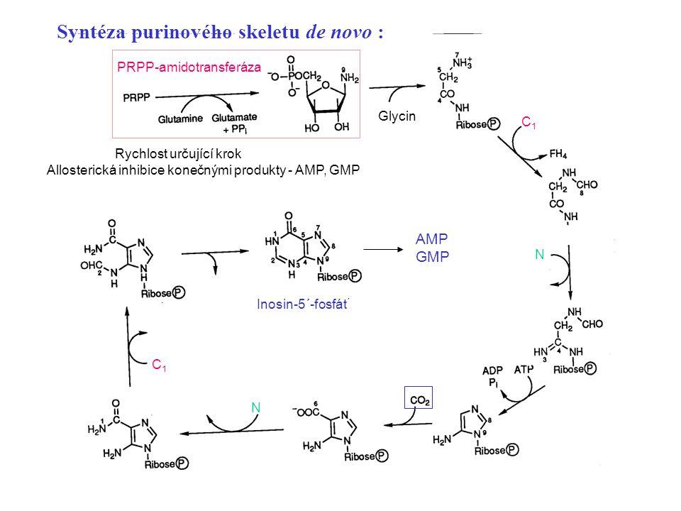 2 Inosin-5´-fosfát ´ Glycin C1C1 C1C1 Syntéza purinového skeletu de novo : Rychlost určující krok Allosterická inhibice konečnými produkty - AMP, GMP