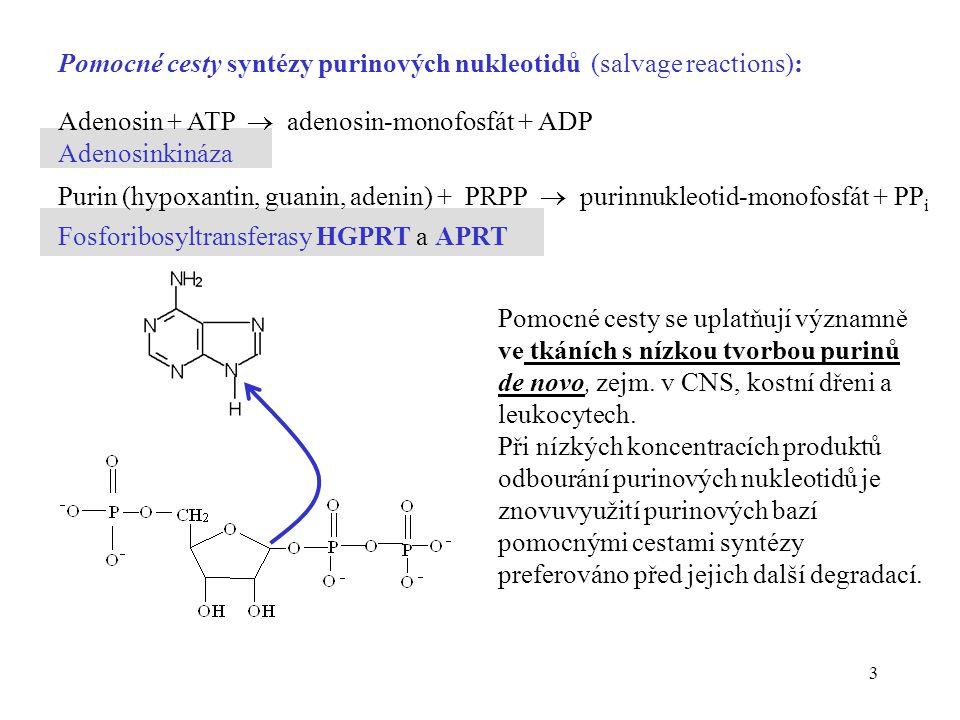 3 Adenosin + ATP  adenosin-monofosfát + ADP Adenosinkináza Purin (hypoxantin, guanin, adenin) + PRPP  purinnukleotid-monofosfát + PP i Fosforibosyltransferasy HGPRT a APRT Pomocné cesty syntézy purinových nukleotidů (salvage reactions): Pomocné cesty se uplatňují významně ve tkáních s nízkou tvorbou purinů de novo, zejm.