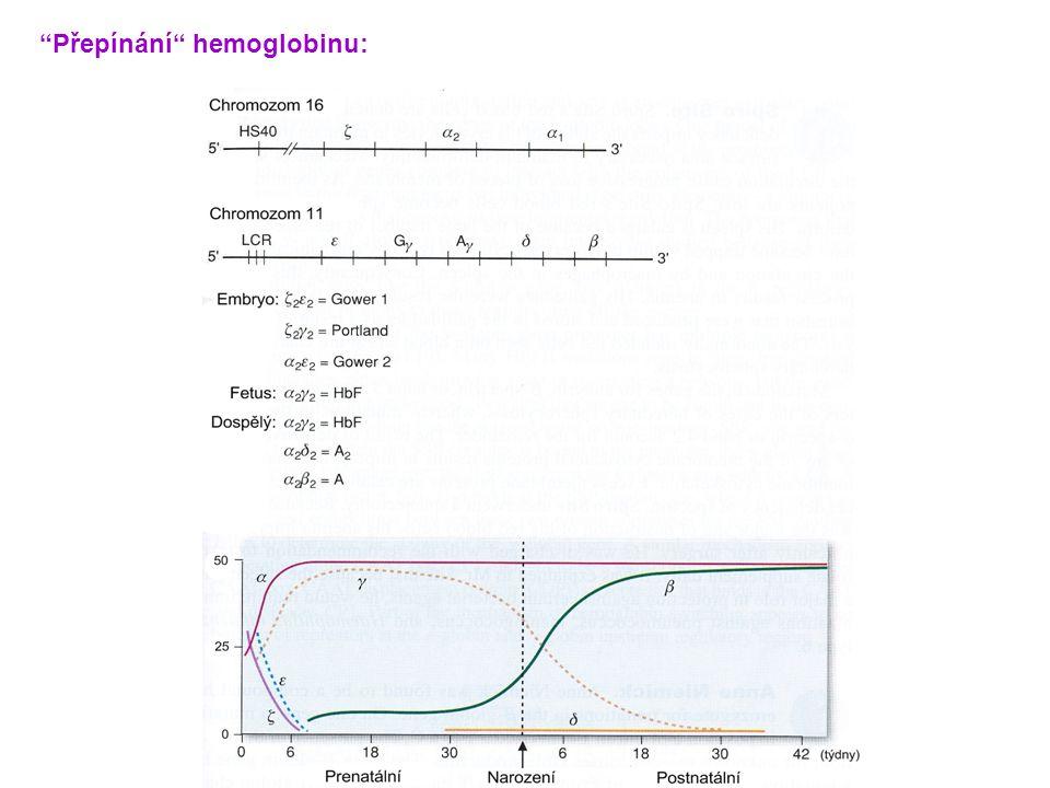 """""""Přepínání"""" hemoglobinu:"""