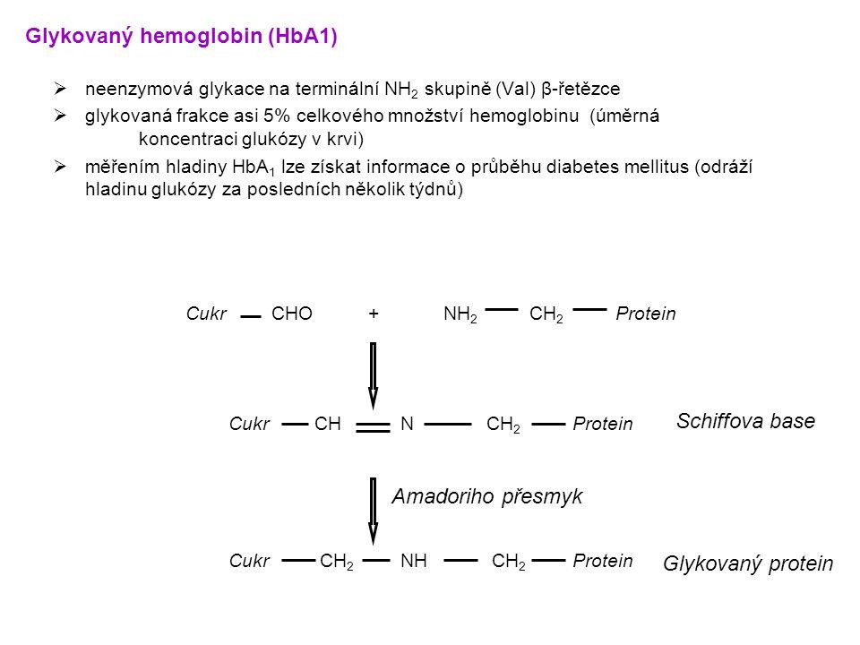  neenzymová glykace na terminální NH 2 skupině (Val) β-řetězce  glykovaná frakce asi 5% celkového množství hemoglobinu (úměrná koncentraci glukózy v