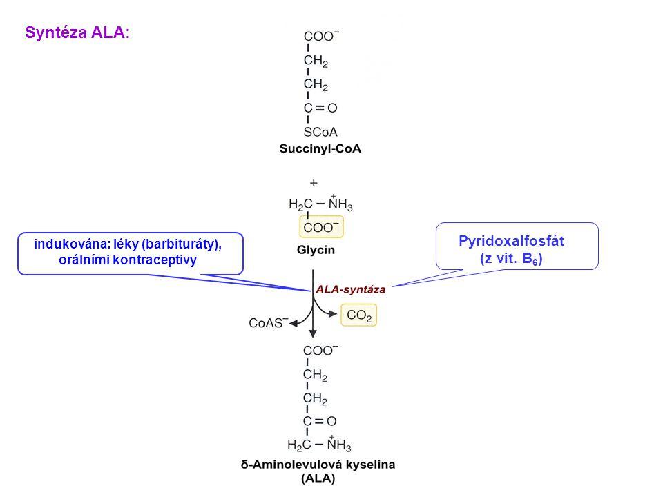 Pyridoxalfosfát (z vit. B 6 ) Syntéza ALA: indukována: léky (barbituráty), orálními kontraceptivy