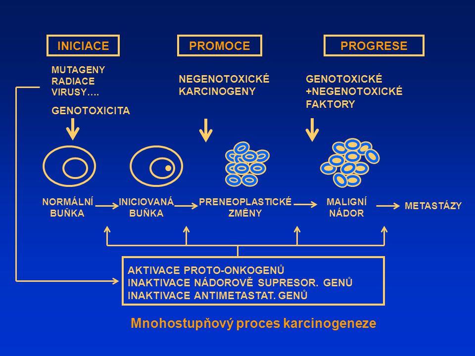 Mnohostupňový proces karcinogeneze INICIACEPROMOCEPROGRESE MUTAGENY RADIACE VIRUSY…. GENOTOXICITA NEGENOTOXICKÉ KARCINOGENY PRENEOPLASTICKÉ ZMĚNY INIC
