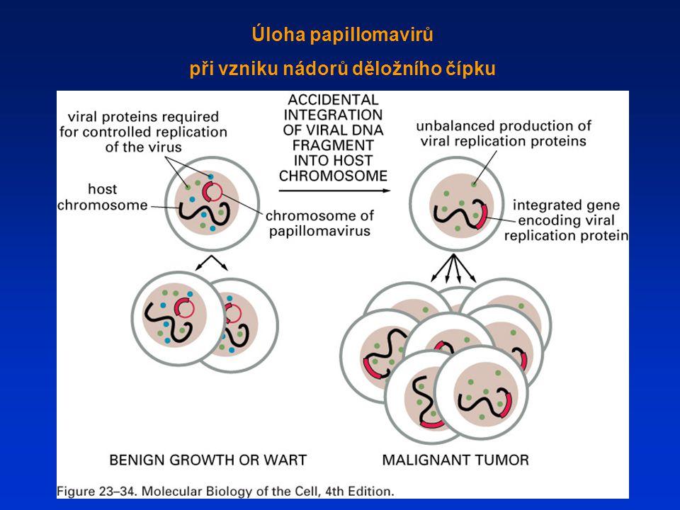 Úloha papillomavirů při vzniku nádorů děložního čípku