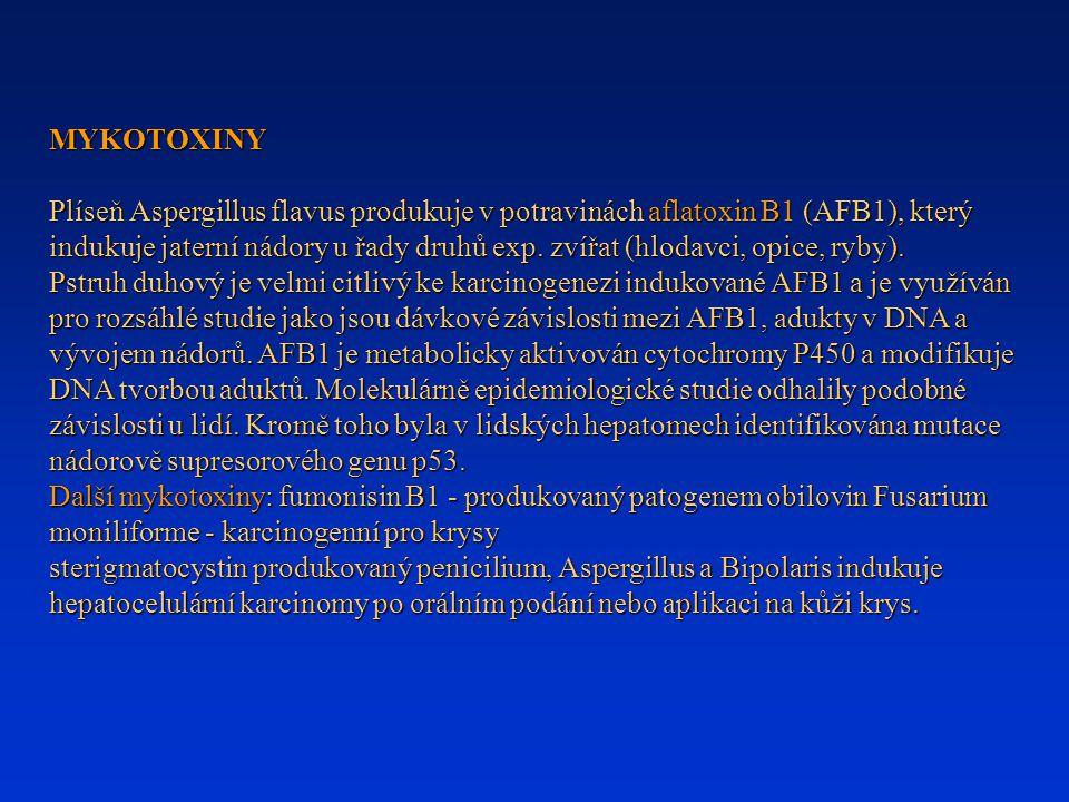 MYKOTOXINY Plíseň Aspergillus flavus produkuje v potravinách aflatoxin B1 (AFB1), který indukuje jaterní nádory u řady druhů exp. zvířat (hlodavci, op