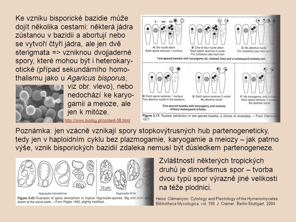 Ke vzniku bisporické bazidie může dojít několika cestami: některá jádra zůstanou v bazidii a abortují nebo se vytvoří čtyři jádra, ale jen dvě sterigm