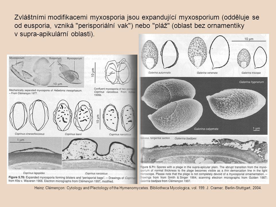 Zvláštními modifikacemi myxosporia jsou expandující myxosporium (odděluje se od eusporia, vzniká