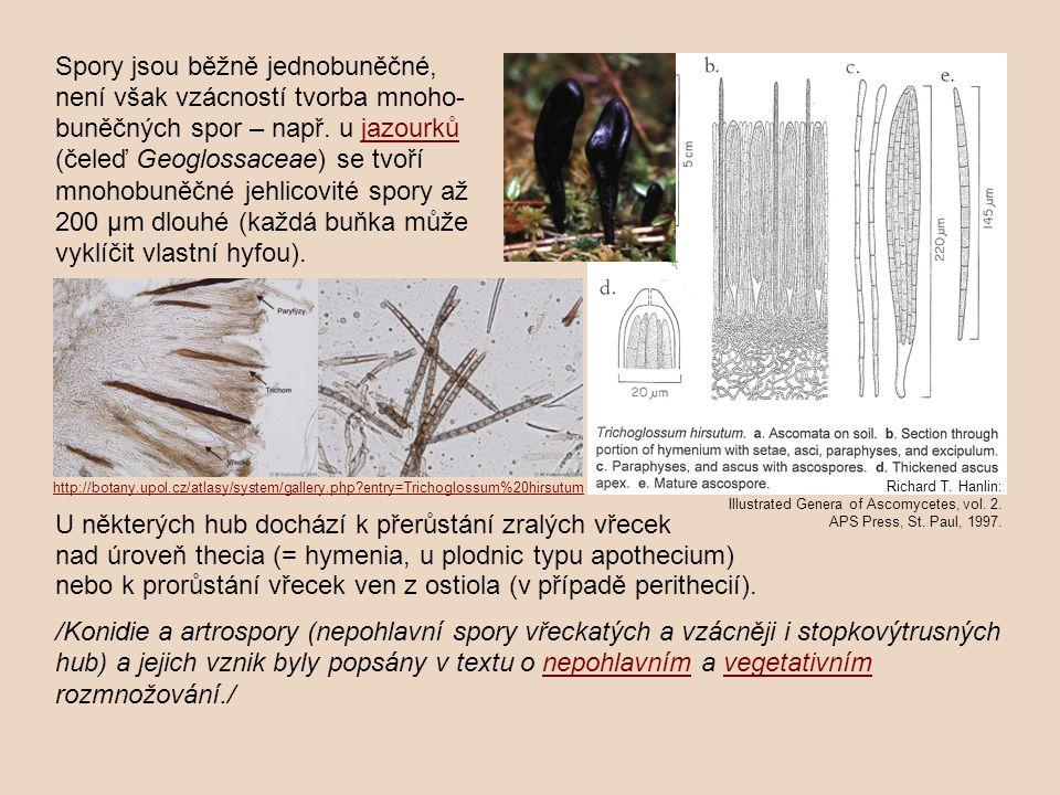 Typické pro rouškaté houby jsou aktivně odmršťované balistospory.