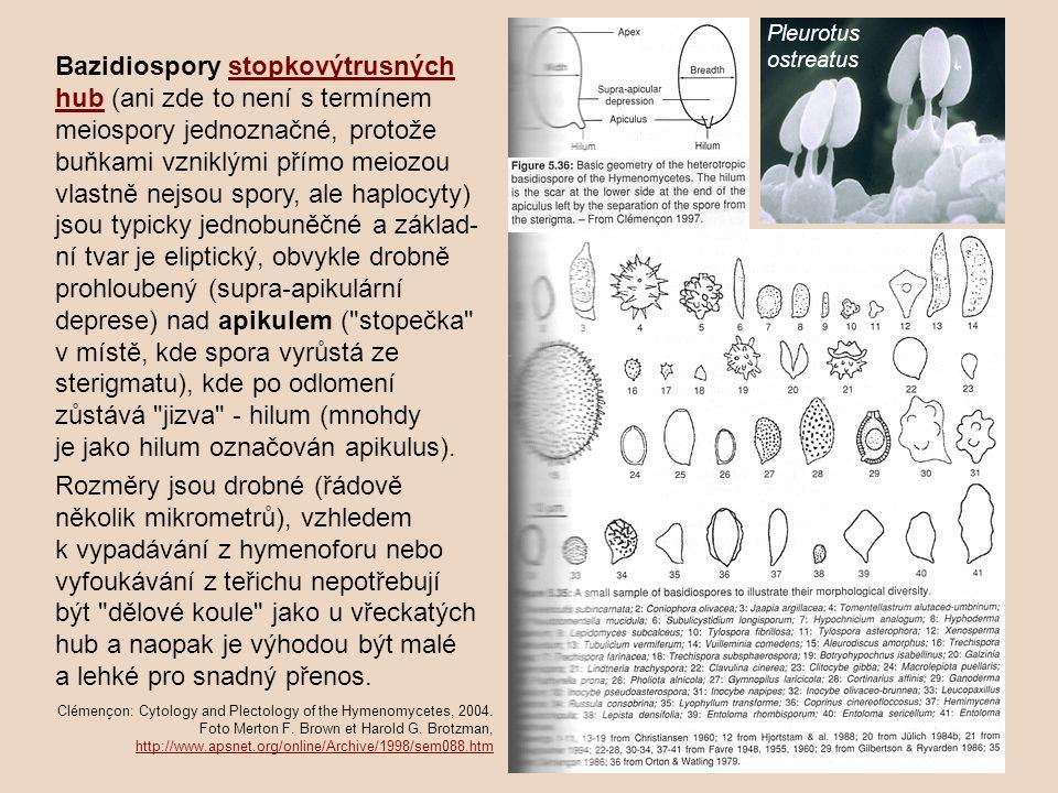 Bazidiospory stopkovýtrusných hub (ani zde to není s termínem meiospory jednoznačné, protože buňkami vzniklými přímo meiozou vlastně nejsou spory, ale