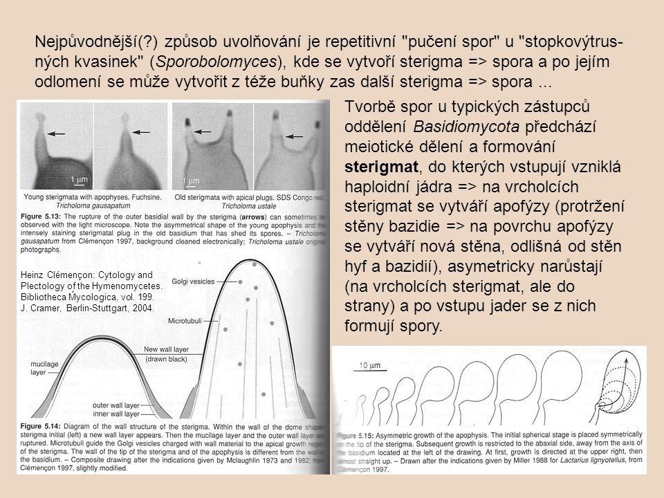Dozrávání spor probíhá u lupenatých hub víceméně současně (izotropické hymenium) nebo postupně – na jednom lupenu mohou být spory v různých fázích vývoje (formující se bazidie, zralé spory i zborcené bazidie po oddělení spor – anizotropické hymenium, viz kapitolu Plodnice hub).Plodnice hub Faktory, které ovlivňují uvolňování výtrusů z plodnice, jsou na jedné straně genetické faktory a biologický rytmus houby a na straně druhé vliv klimatických podmínek (vlhkost, teplota, vítr).