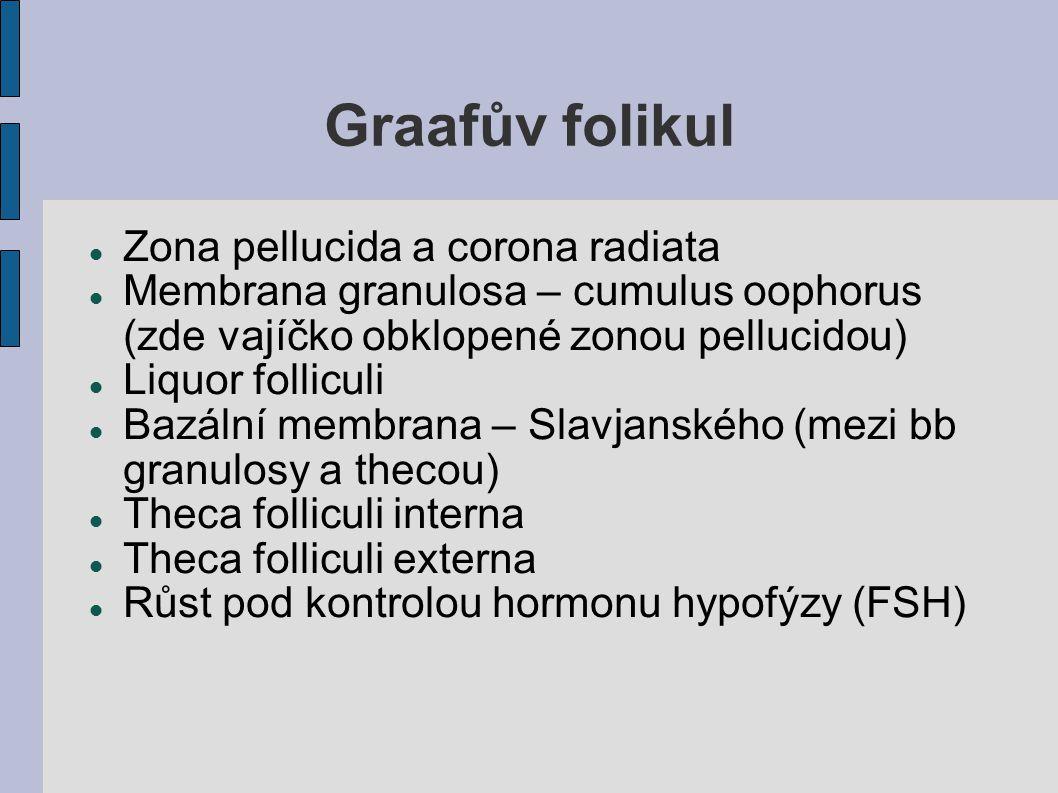 Graafův folikul Zona pellucida a corona radiata Membrana granulosa – cumulus oophorus (zde vajíčko obklopené zonou pellucidou) Liquor folliculi Bazáln