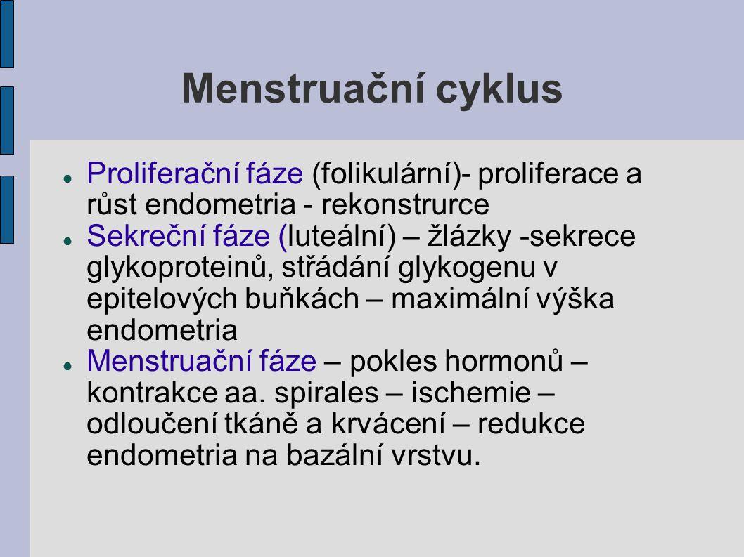 Menstruační cyklus Proliferační fáze (folikulární)- proliferace a růst endometria - rekonstrurce Sekreční fáze (luteální) – žlázky -sekrece glykoprote