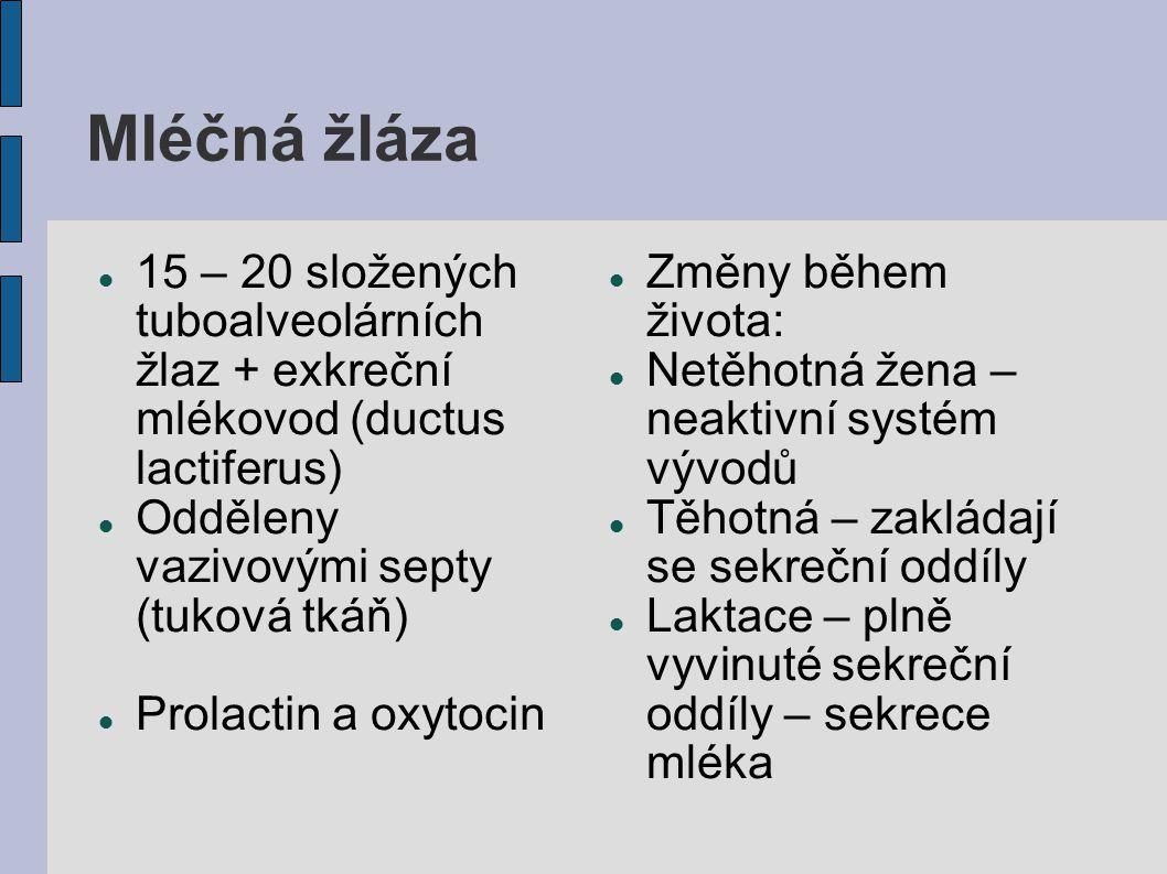 Mléčná žláza 15 – 20 složených tuboalveolárních žlaz + exkreční mlékovod (ductus lactiferus) Odděleny vazivovými septy (tuková tkáň) Prolactin a oxyto