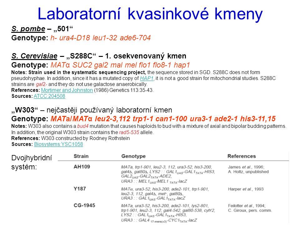 """Laboratorní kvasinkové kmeny S. pombe – """"501"""" Genotype: h- ura4-D18 leu1-32 ade6-704 S. Cerevisiae – """"S288C"""" – 1. osekvenovaný kmen Genotype: MATα SUC"""