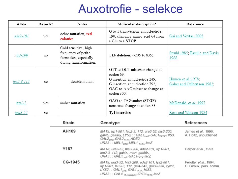 AlleleReverts?NotesMolecular description a Reference ade2-101yes ochre mutation, red colonies G to T transversion at nucleotide 190, changing amino ac