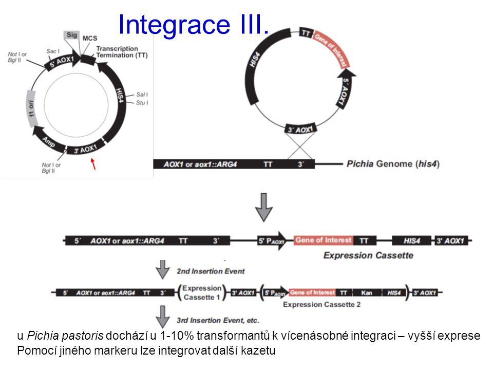 Integrace III. u Pichia pastoris dochází u 1-10% transformantů k vícenásobné integraci – vyšší exprese Pomocí jiného markeru lze integrovat další kaze