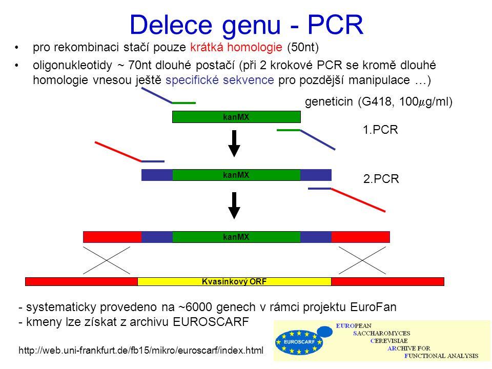 Delece genu - PCR pro rekombinaci stačí pouze krátká homologie (50nt) oligonukleotidy ~ 70nt dlouhé postačí (při 2 krokové PCR se kromě dlouhé homolog