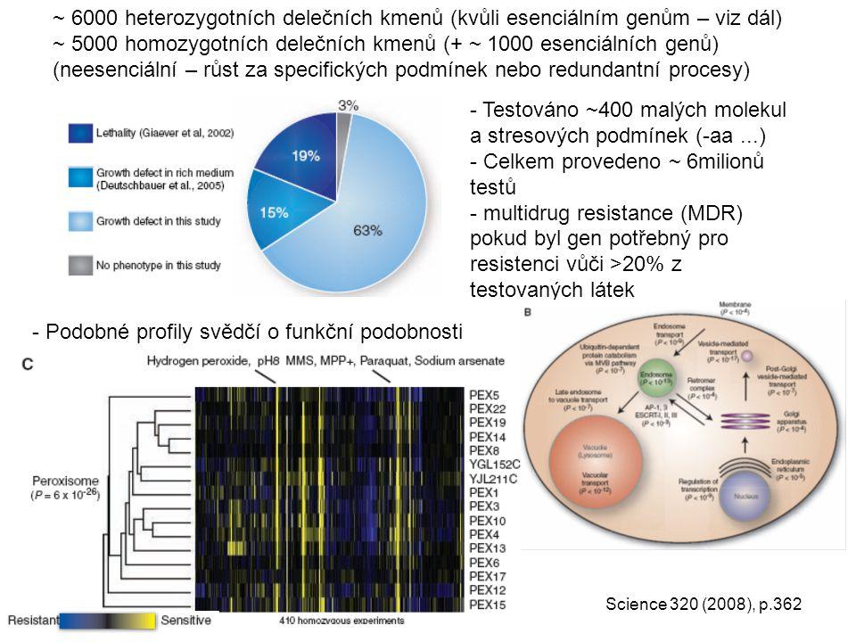 ~ 6000 heterozygotních delečních kmenů (kvůli esenciálním genům – viz dál) ~ 5000 homozygotních delečních kmenů (+ ~ 1000 esenciálních genů) (neesenci