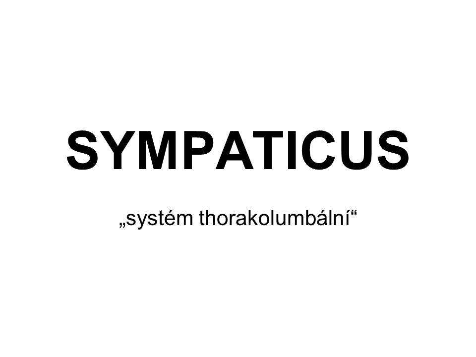 """SYMPATICUS """"systém thorakolumbální"""""""