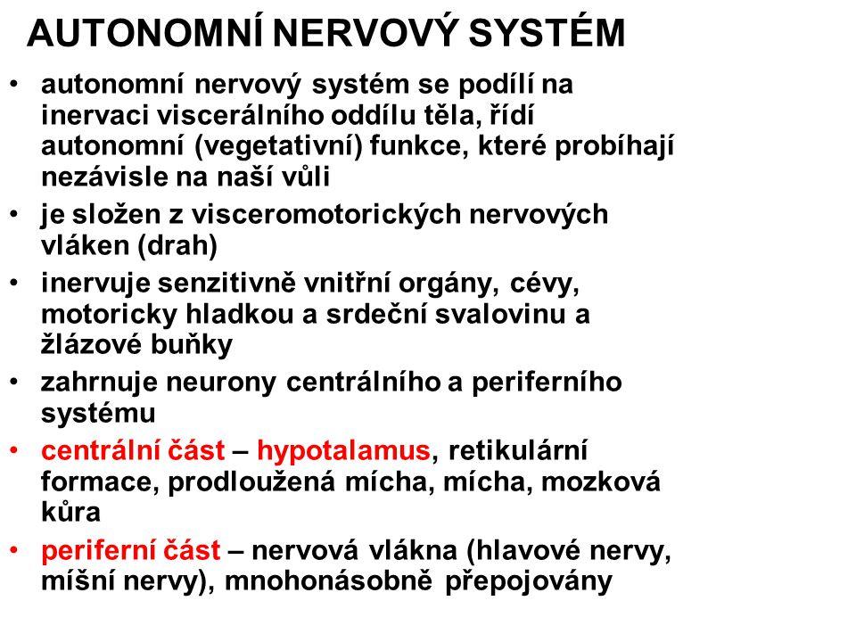 AUTONOMNÍ NERVOVÝ SYSTÉM autonomní nervový systém se podílí na inervaci viscerálního oddílu těla, řídí autonomní (vegetativní) funkce, které probíhají