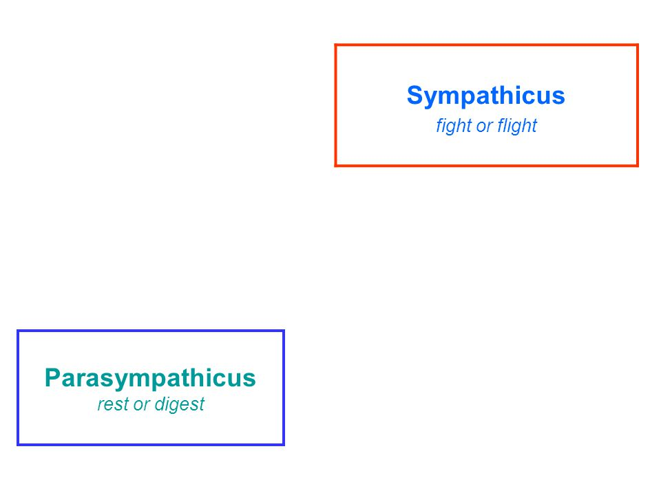 Parasympathicus rest or digest Sympathicus fight or flight