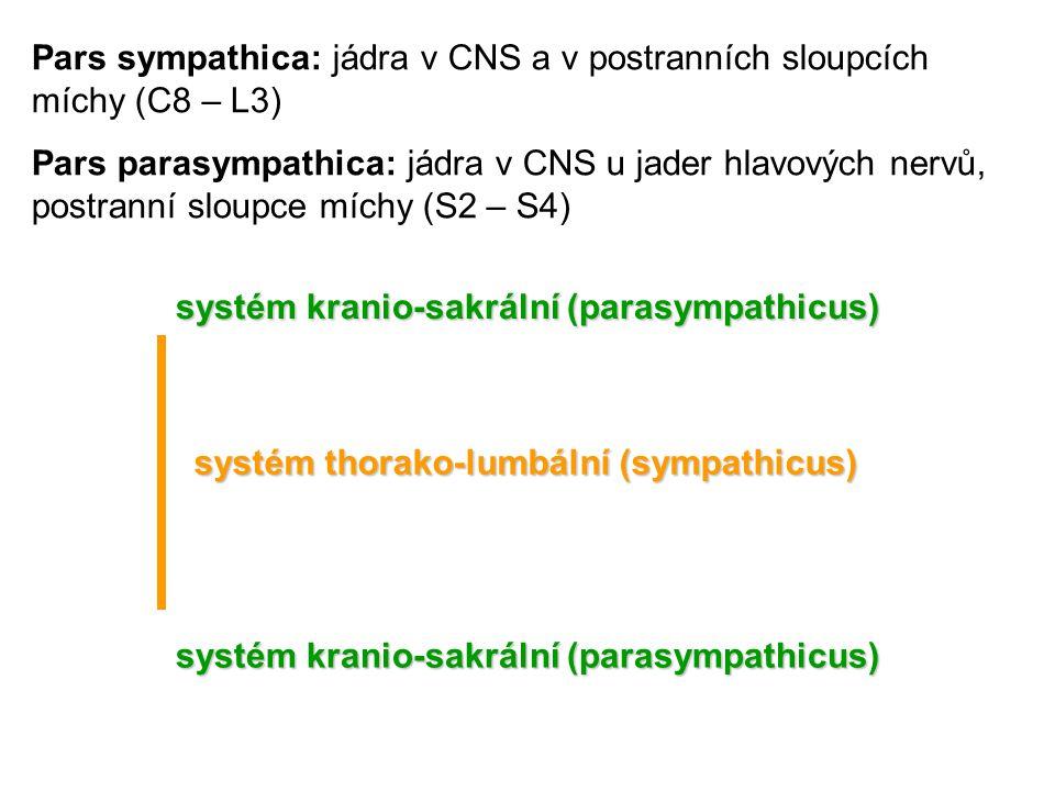 systém kranio-sakrální (parasympathicus) systém thorako-lumbální (sympathicus) systém kranio-sakrální (parasympathicus) Pars sympathica: jádra v CNS a